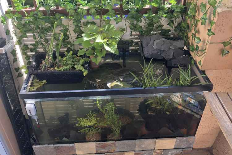 Balcony Pond | Set The Best Mini Pond For Your Balcony