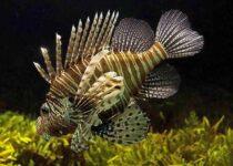 vastu fish
