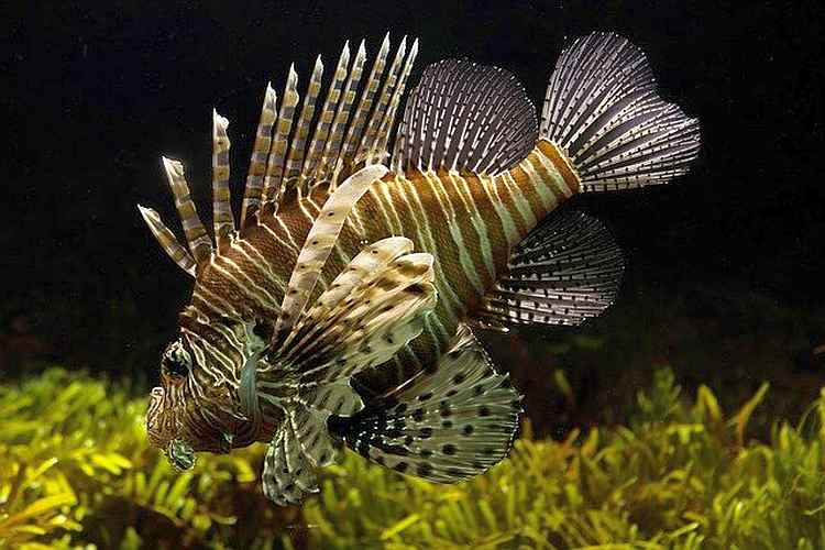 Vastu For Fish And Aquarium | Powerful Fish Vastu Tips