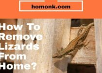 how to remove lizards from home