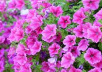 best plants for balcony india