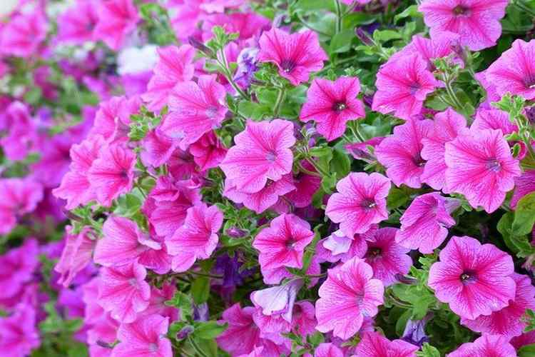 Best Plants For Balcony In India – Make Balcony Heavenly