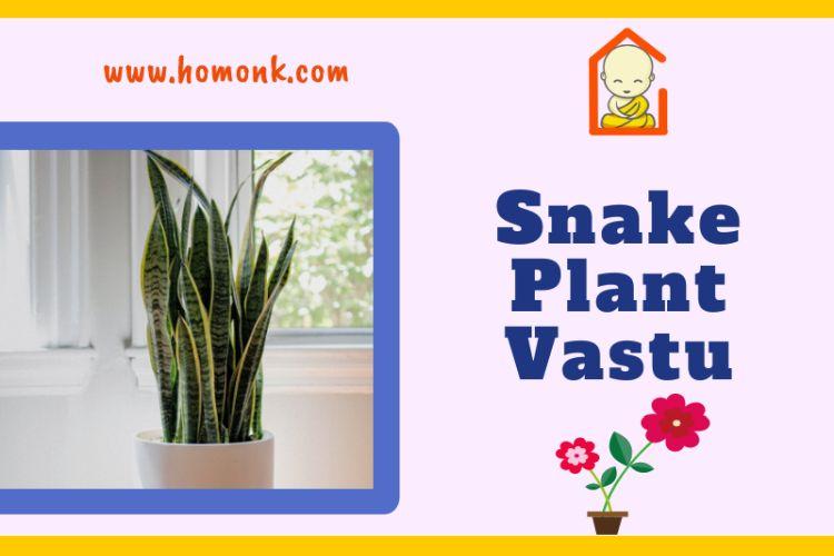Snake Plant Vastu