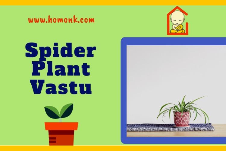 spider plant vastu